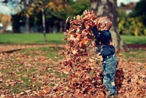 boy leaf toss